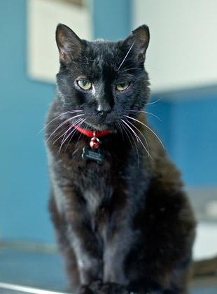 richmond, va veterinary hospital